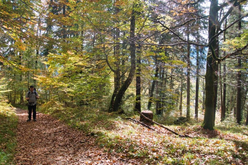 Aufstieg durch die Wälder / Kramerspitz