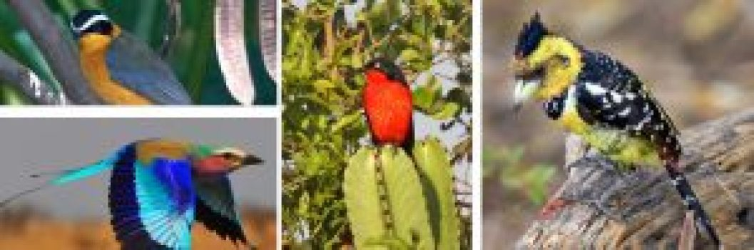 birding-elgon