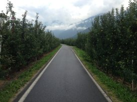 Etappe 1 AUGUSTOUR 2014: Apfel Plantagen