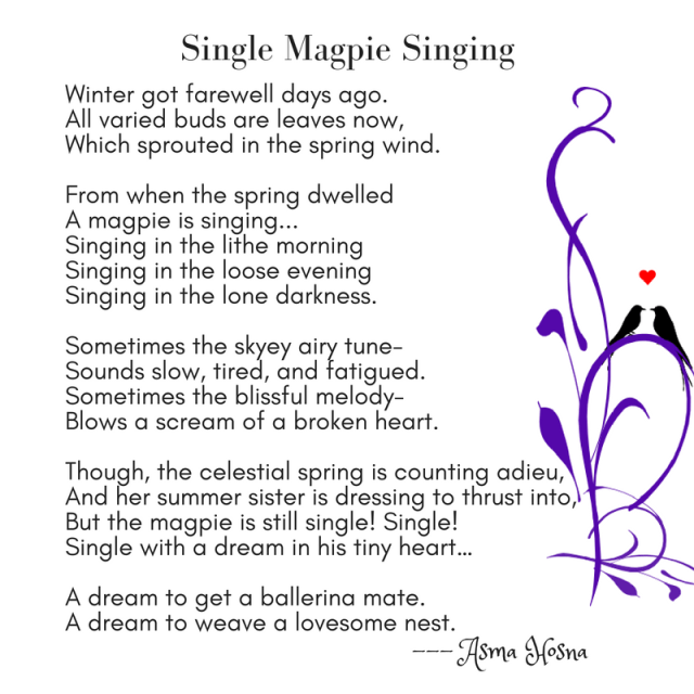 """""""Single Magpie Singing"""" by Asma Hosna"""