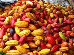 Cacao: la Côte d'Ivoire et le Ghana fixent le prix plancher à 2600 dollars la tonne