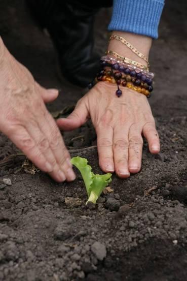 Programa HortaDIF impulsa el desarrollo de las comunidades