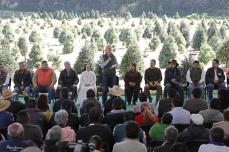 Inicia Gobernador Alfredo del Mazo campaña de comercialización de Árboles de Navidad, en Amecameca