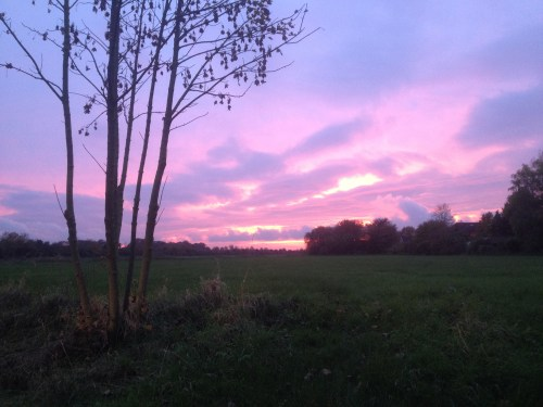 Amazing pink sky