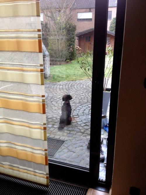 Poppy as guard dog