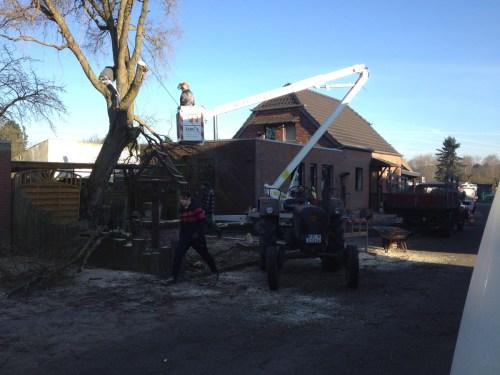 Next door's tree removal 2