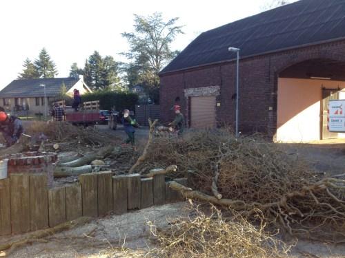 Next door's tree removal 3