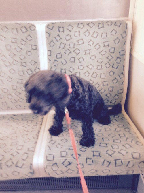 Poppy on S-Bahn