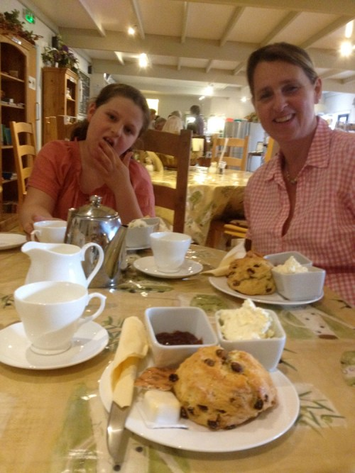 Cream tea at Craft Nurseries 1