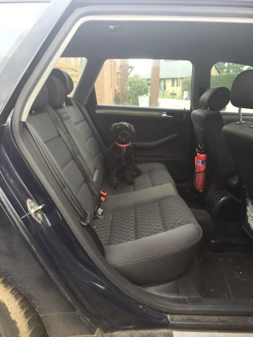 Poppy in car