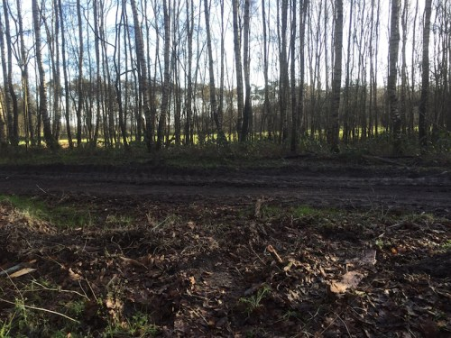 Muddy track 1