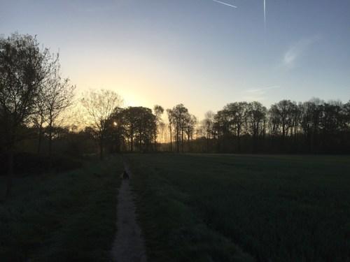 Dogwalk sunrise
