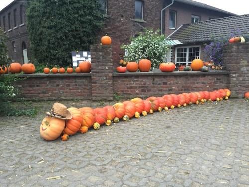 pumpkin-caterpillar
