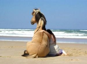 pensions chevaux retraite ou pré retraite - Un monde équestre différent