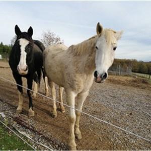 2 chevaux au Paddock Paradise