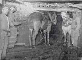 Les Chevaux dans la mine au pays des ch'tis