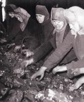 les trieuses de la mine au pays des ch'tis