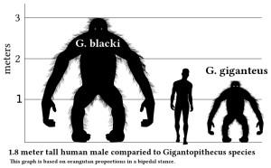 Gigantopithecus_v_human