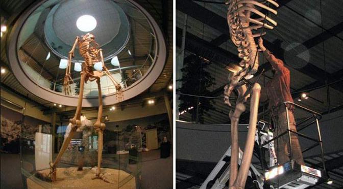 Human Giant's