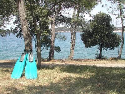 Zelena Laguna