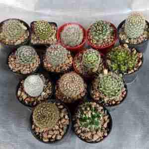 mixed cactus