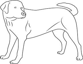 Ausmalbilder zum Ausdrucken Labrador Hund