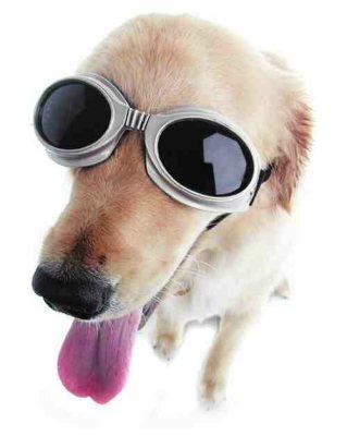 hundebrille-3