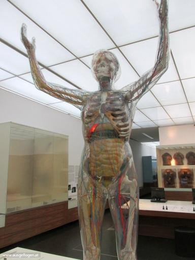 Hygienemuseum - die Gläserne Frau
