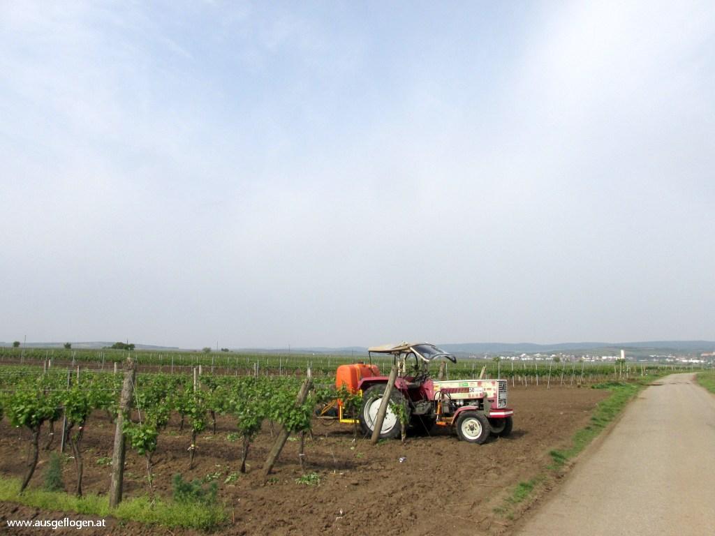 Traktor Weingarten