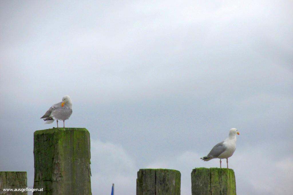 Nordsee Urlaub mit Kindern