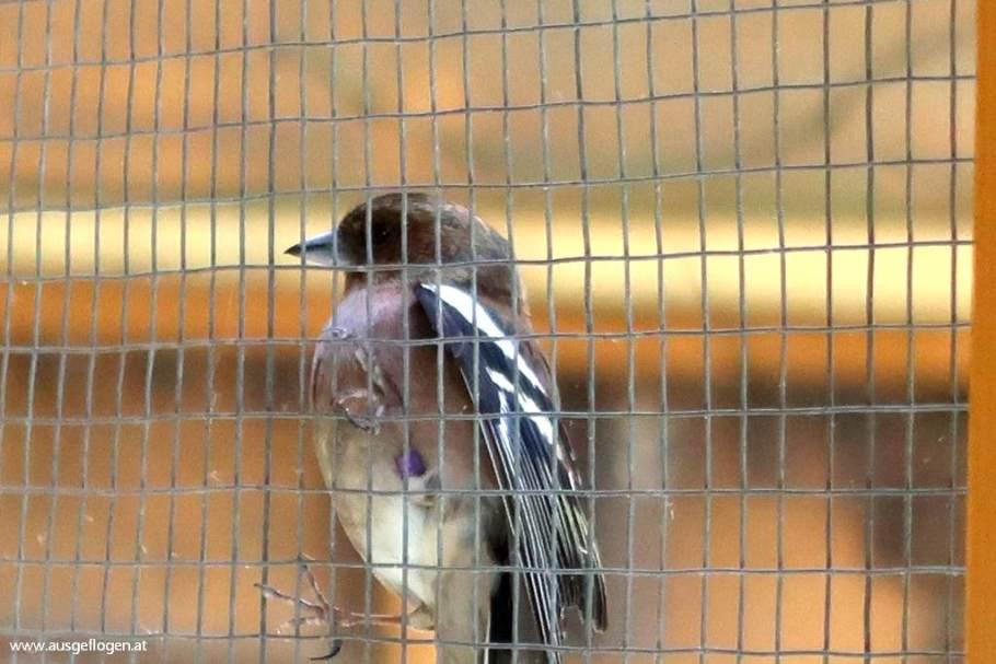 Vogelvoliere Rechnitz Stausee Naturpark Geschriebenstein