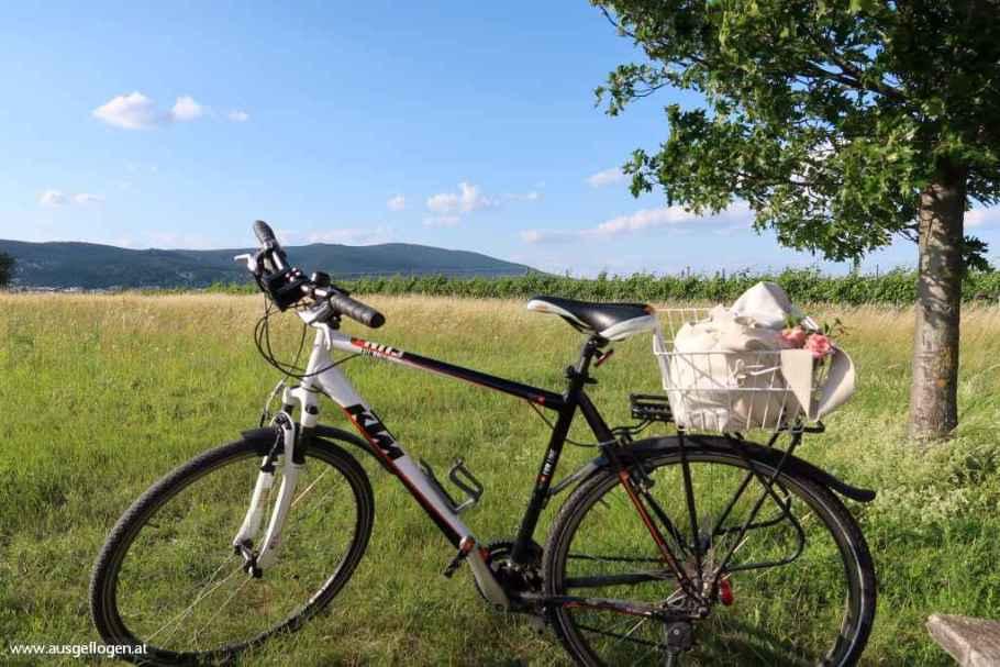 Top 10 Radtouren für Genussradler: die schönsten RADWEGE NIEDERÖSTERREICHS