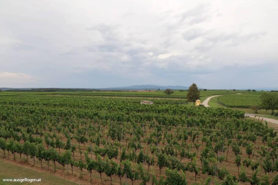 Rund ums MITTELBURGENLAND: im Sonnenland zwischen See und Wein