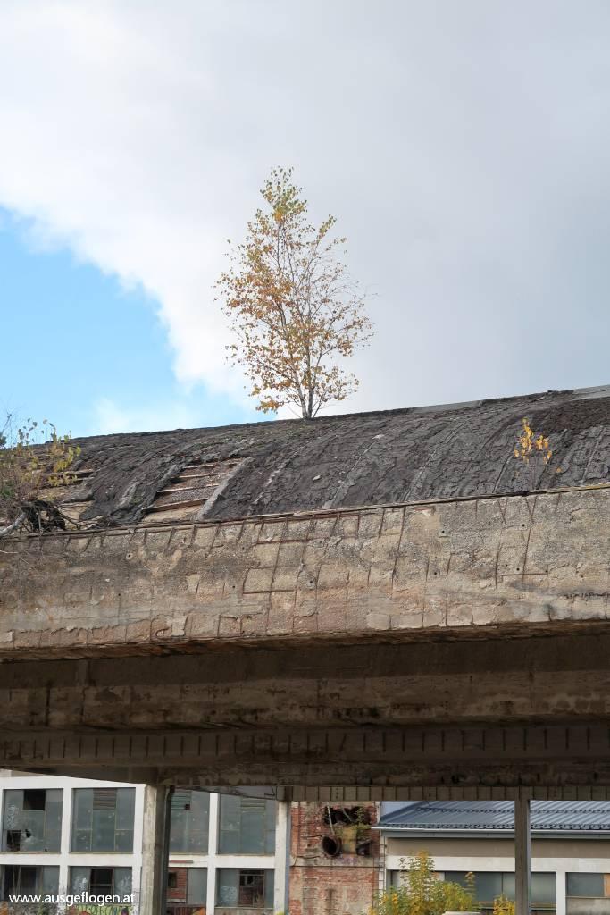 Lost Place Waldviertel Gmünd Bobbin Möbelfabrik