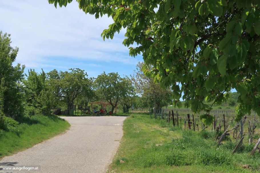 Kirschblütenradweg Breitenbrunn