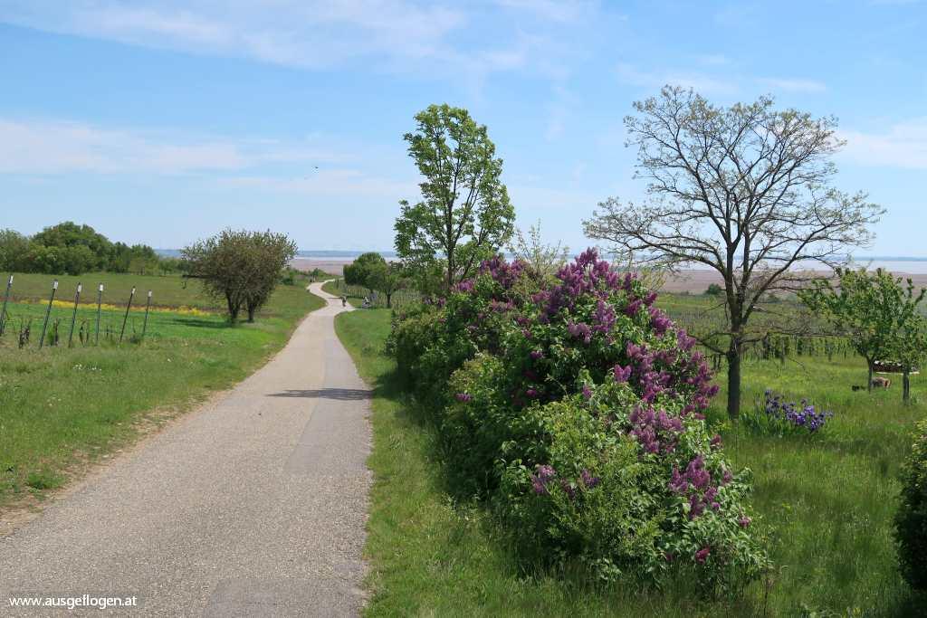 Kirschblütenradweg Burgenland