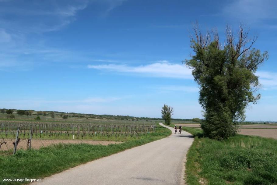 Neusiedlersee Radweg Breitenbrunn Burgenland