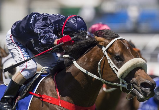 Zoustar (Northern Meteor - Zouzou) wins the G1 Coolmore Stud Stakes on 2 November 2013.  Ridden by Jimmy Cassidy.  Trained by Chris Waller.  Photo by Bronwen Healy.