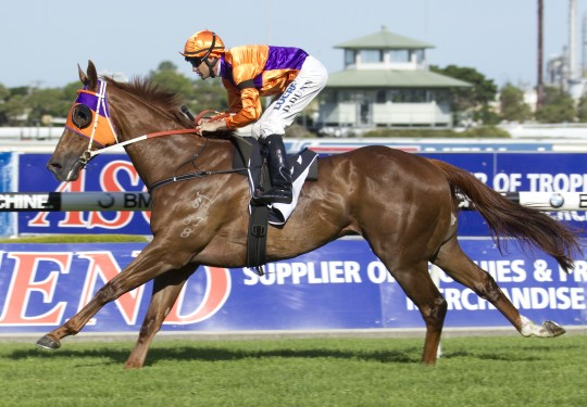 Our Boy Malachi (Dwayne Dunn) wins the Starlight Stakes (Listed) at Rosehill on November 29, 2014 - photo by Martin King / Sportpix - copyright