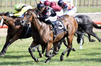 Volpe Veloce wins Group Two Japan New Zealand International Trophy at Tauranga