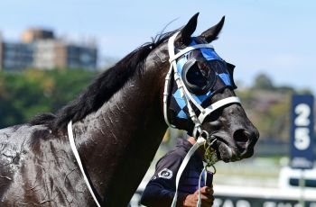 Ringerdingding after his win in the Group Three Carbine Club Stakes