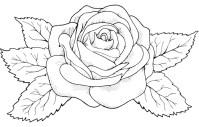 Blumen (2) | Ausmalbild