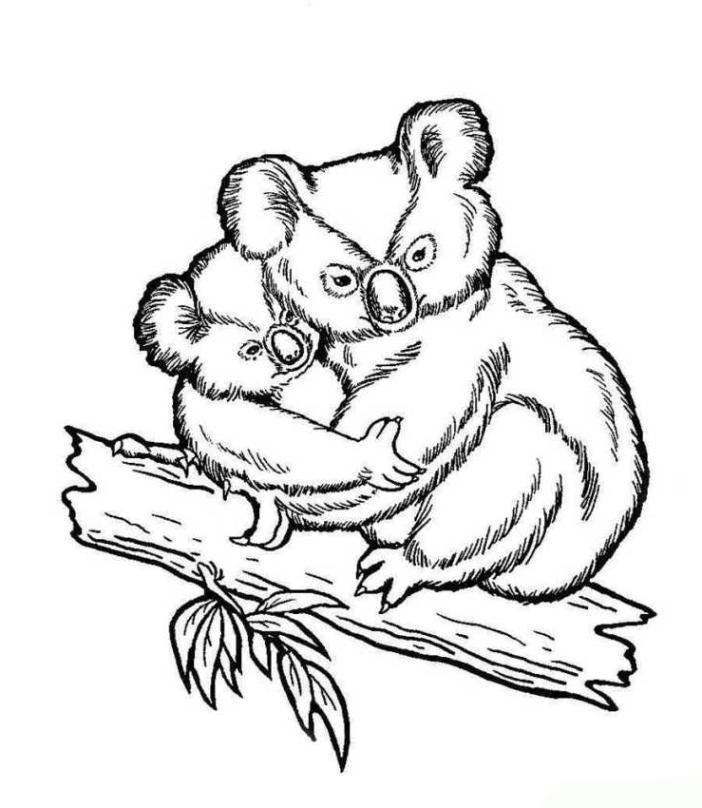 Malvorlagen zum Drucken Ausmalbild Koala kostenlos 2