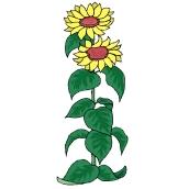 Malvorlagen Sonnenblume