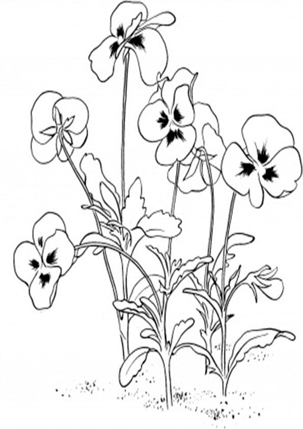Ausmalbilder Blumen-20 Ausmalbilder Malvorlagen