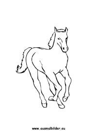 Ausmalbilder Pferde Und Einhörner Ausmalbild Pferde Pony