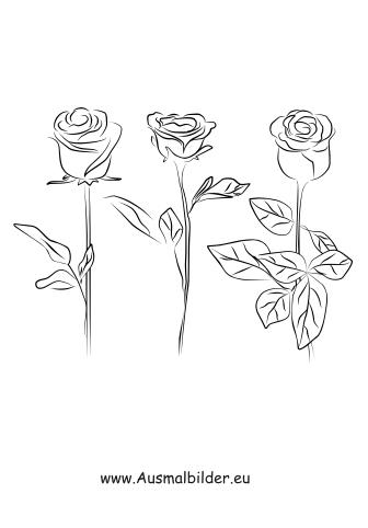 Ausmalbilder Drei Rosen  Rosen Malvorlagen