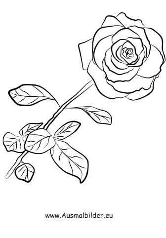 Ausmalbilder Einzelne Rose - Rosen Malvorlagen