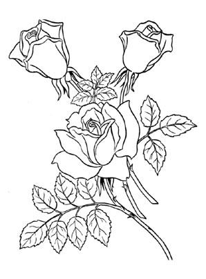 Ausmalbilder Rosen 1 - Rosen Malvorlagen