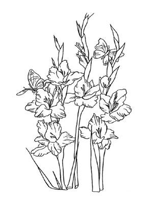 Ausmalbilder Gladiolen  Blumen Malvorlagen ausmalen